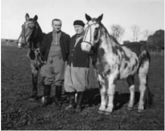 caballo-criollo