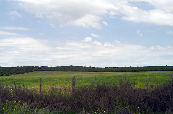 La huella de carbono en la agricultura se reduciría con fertilizantes de última generación.