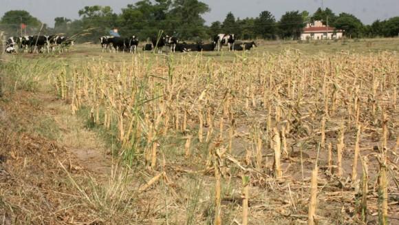 sequía2