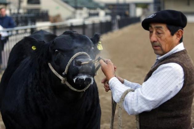 Controlar la sanidad en toros evita pérdidas de hasta un 30%.