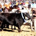 Campo a Pleno - La Rural 2014 - Inauguracion Oficial 7