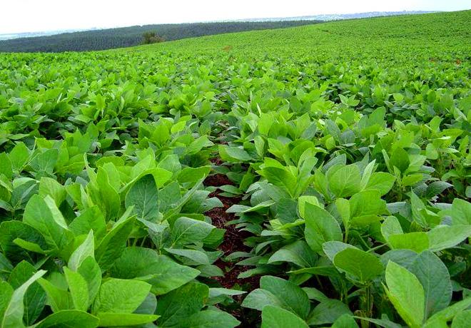 Recalculando: el maíz cae en 200 mil Ha; la soja sube y va por 17,9 M Ha.