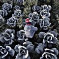 Decimo Premio New Holland de Fotoperiodismo 1