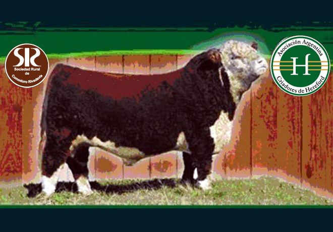 expo-bovina
