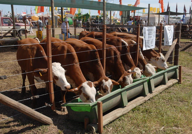 Expoagro - Vacas