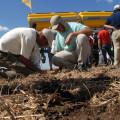 Expoagro Precision-Planting