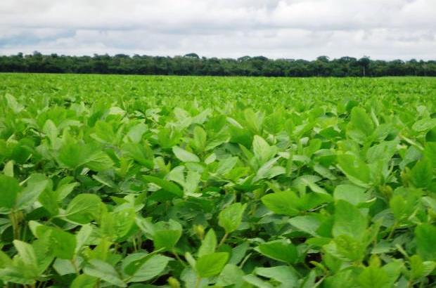 Finalizó la cosecha de soja con una producción total de 36 millones de toneladas.