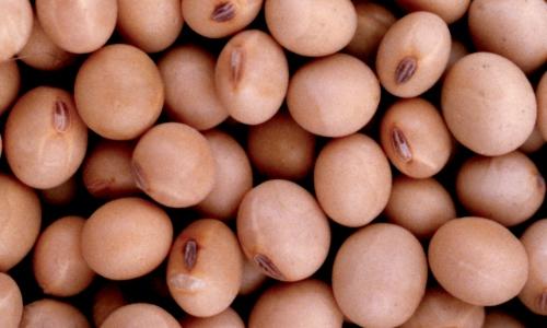 Por la sequía, Argentina le compró a Brasil 120.000 toneladas de soja.