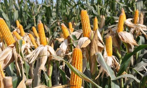 Más de 13 millones de hectáreas sembradas se encuentran con déficit hídrico.