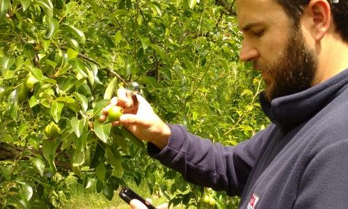 Nuevas aplicaciones para el manejo sanitario de frutales.