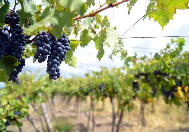 Julio registró un importante crecimiento en la exportación de vinos.