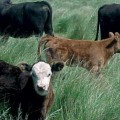 CRA. Sanidad Animal