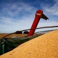 Agro Industria - Soja - Plan Belgrano