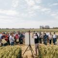 Nidera hace una nueva apuesta al cultivo de trigo
