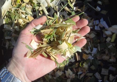 Ensilar maíz1