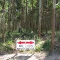 Plantaciones forestales regadas con aguas residuales