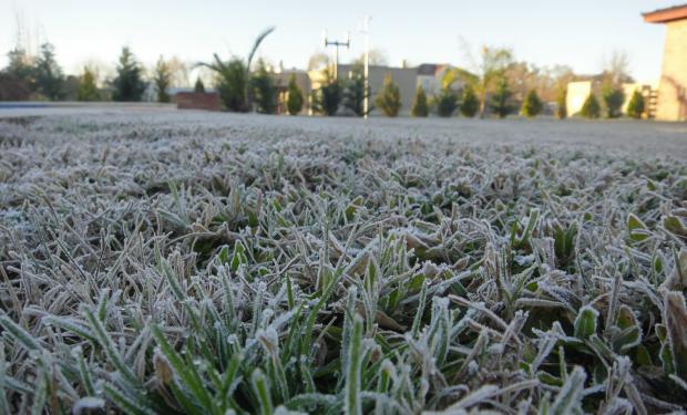 Las heladas afectaron al trigo en el sur de la zona núcleo.
