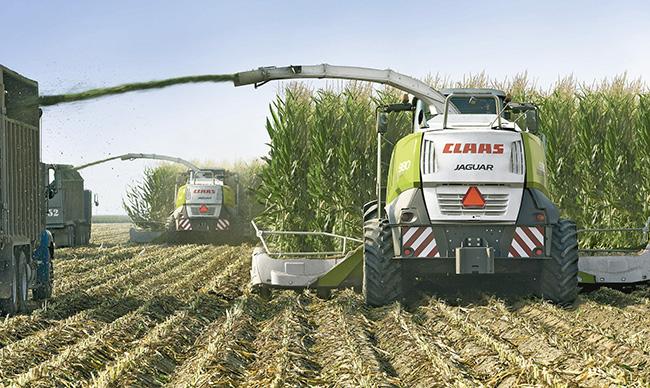 Silaje de maíz
