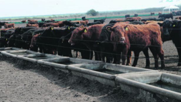 Hoy comienza ArgenCarne, la muestra que analizará la cadena de la carne argentina.