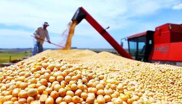 Complejo soja: ¿Por qué caen las exportaciones de harina en beneficio del poroto sin procesar?