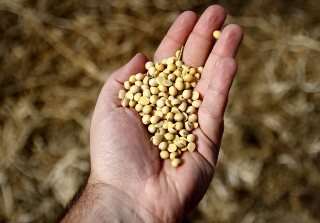 El INASE continúa con controles del uso de semillas en la presente campaña agrícola.