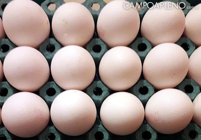 Se celebra la Semana Mundial del Huevo, del 7 al 11 de octubre.