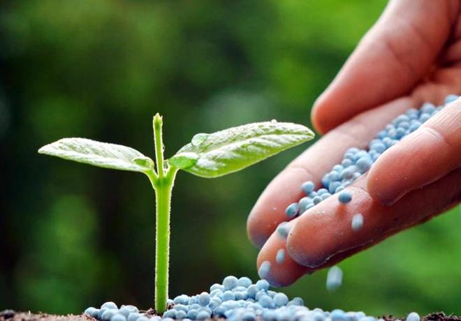 Bolsa de Cereales - Fertilizacion