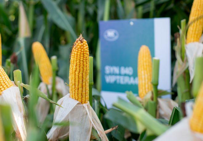 El Gobierno dejó sin efecto el cupo para la exportación de maíz.