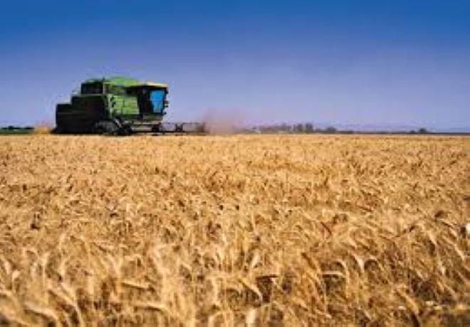 Acopiadores volvió a recordarle al Gobierno que peligra la comercialización de trigo argentino por el HB4.