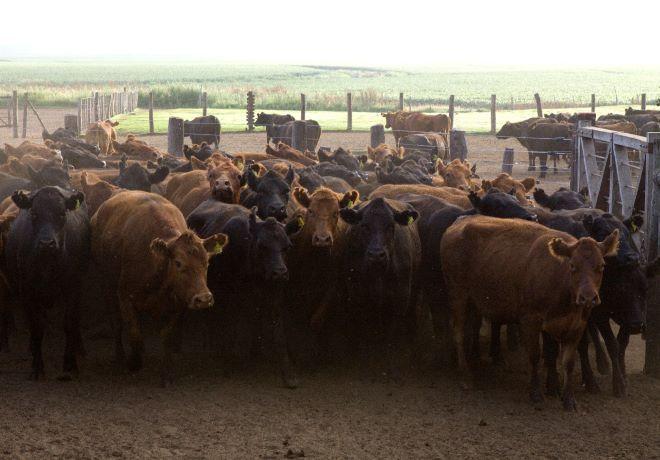 Actualización del Plan Nacional de Control y Erradicación de Brucelosis bovina.