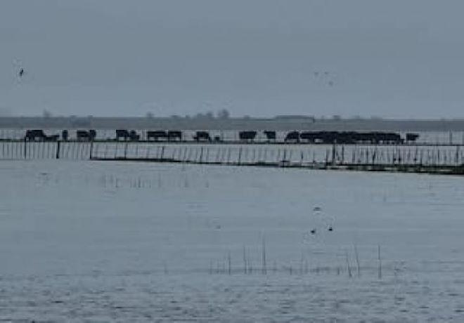 Más de 300.000 hectáreas están inundadas en campos de Buenos Aires.