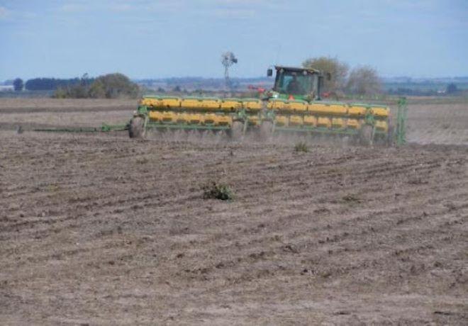 Los productores de Santa Fe no cubrieron previsiones de girasol y maíz por la sequía.